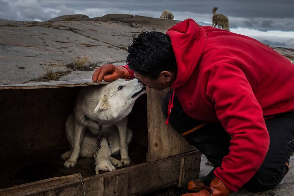 Musher greeting his sleddog in Aasiaat. Photo by Honest Greenland - Visit Greenland