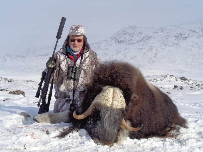 Musk ox in winter near Kangerlussuaq. Photo by Trophy Hunting Greenland, Visit Greenland