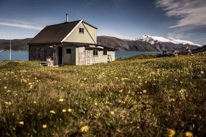 A holiday house in a flowery field in Qassiarsuk in South Greenland. Photo by Mads Pihl.