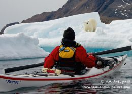 Kayaker meeting some wildlife near Tasiilaq. By N.A Antognelli