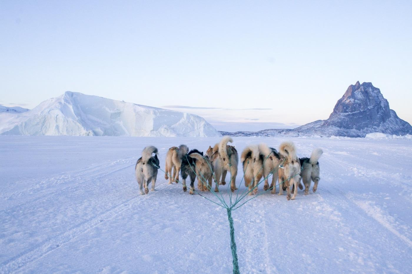 Photo from one of the dog sledding excursions between settlements with the Uummannaq mountain in the background. Photo by Greenland Fiord Tours