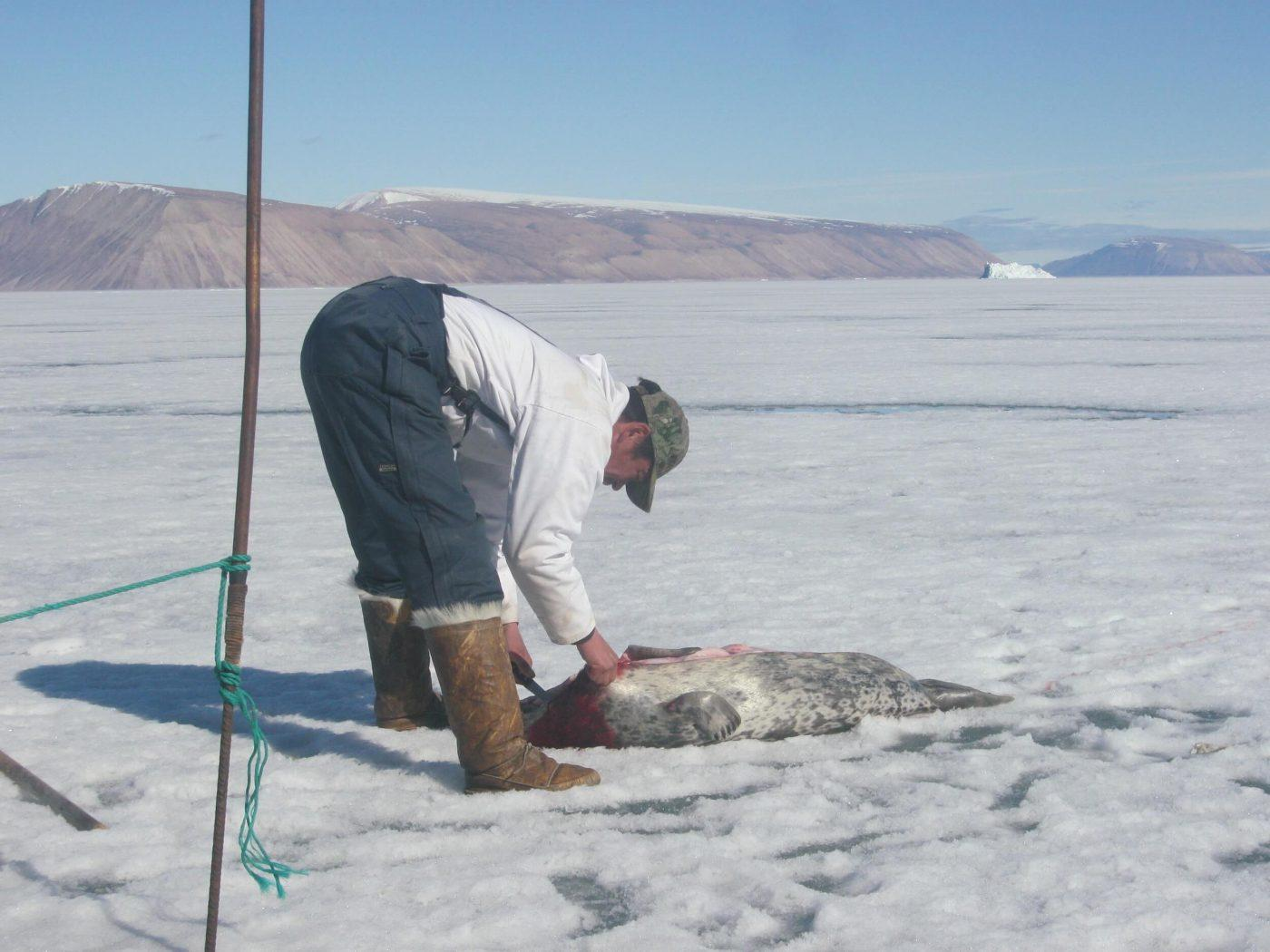 Owner Mads Ole flinging a seal on ice close to Qaanaaq, North Greenland. Photo by Nunataq Atsuk Travel
