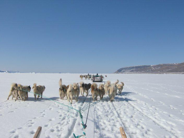 Dogsledding in Qaanaaq, North Greenland. Photo by Nunataq Atsuk Travel