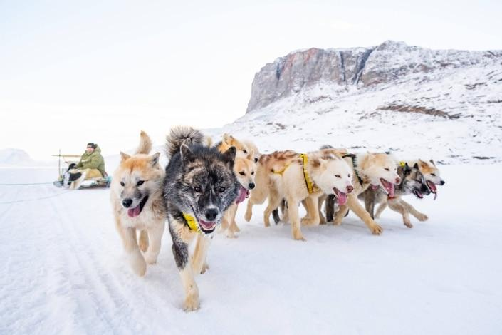 Sleddogs running on ice in Winter. Photo by Guide to Greenland