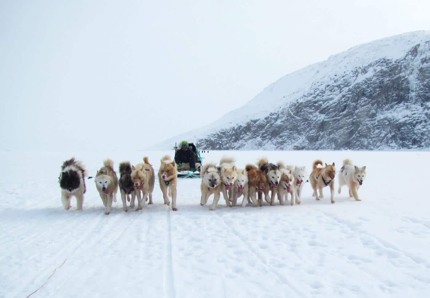 Grønland – Hundeslæde, indlandsis og nordlys. Greenland by Topas