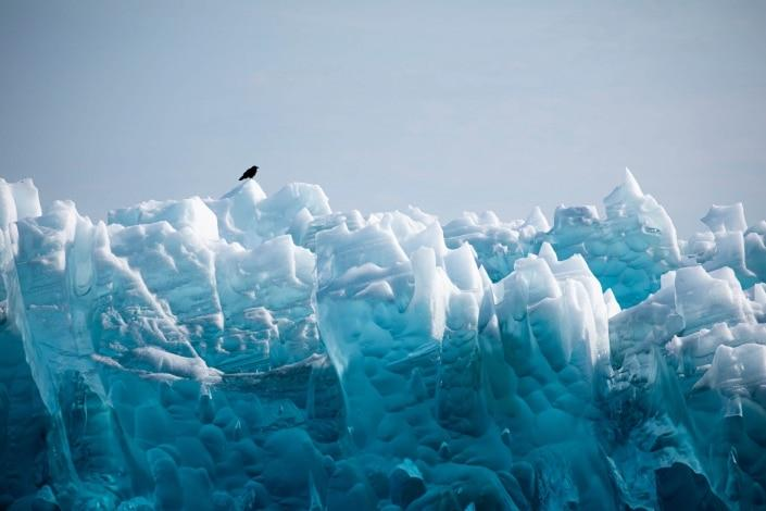 Raven sitting on the glacier, Qalerillat Sermiat, Narsaq, South Greenland. Photo by Peter Lindstrom - Visit Greenland