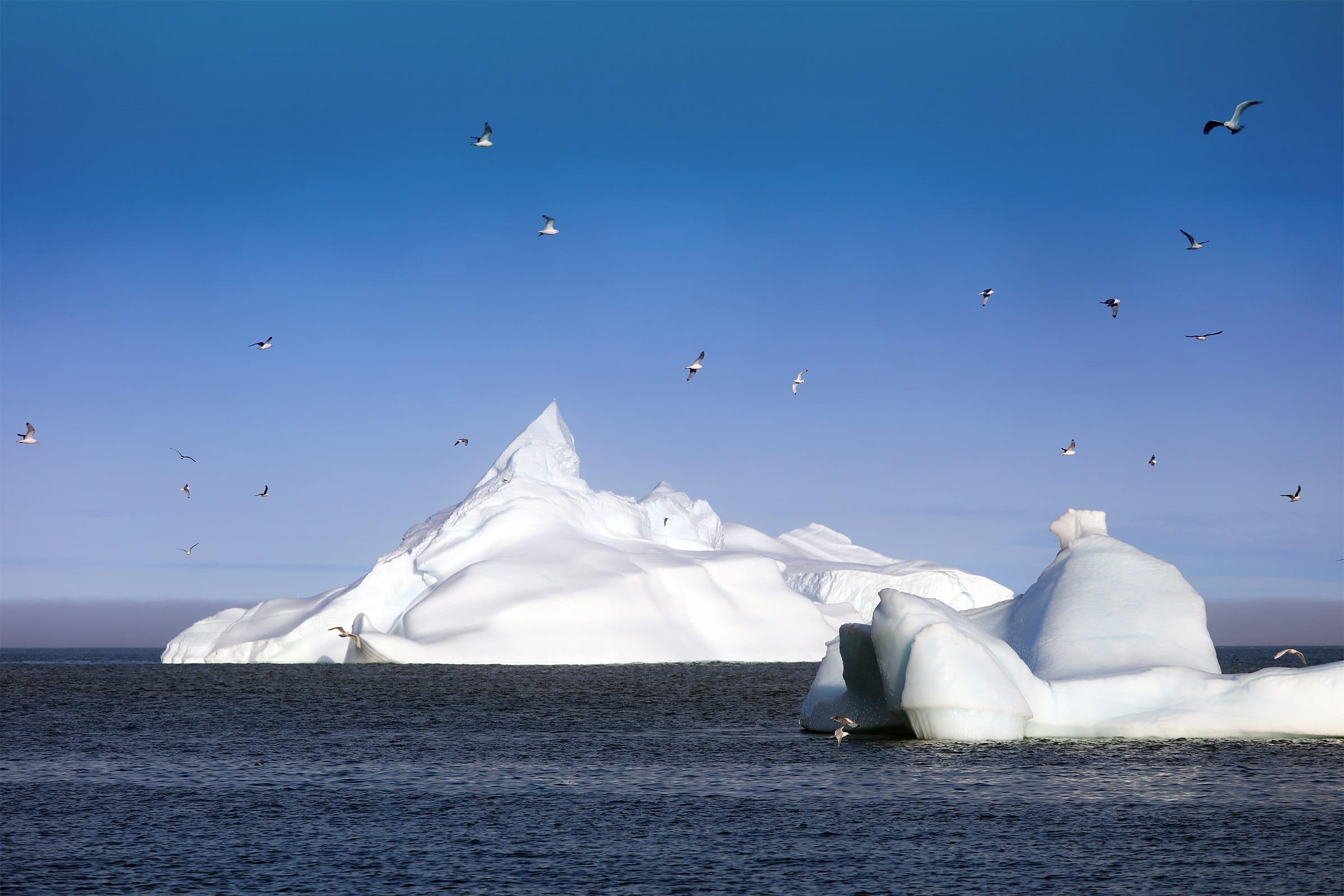 Birds flying over floating icebergs in Disko Bay in Greenland. Jurga Rubinovaite.