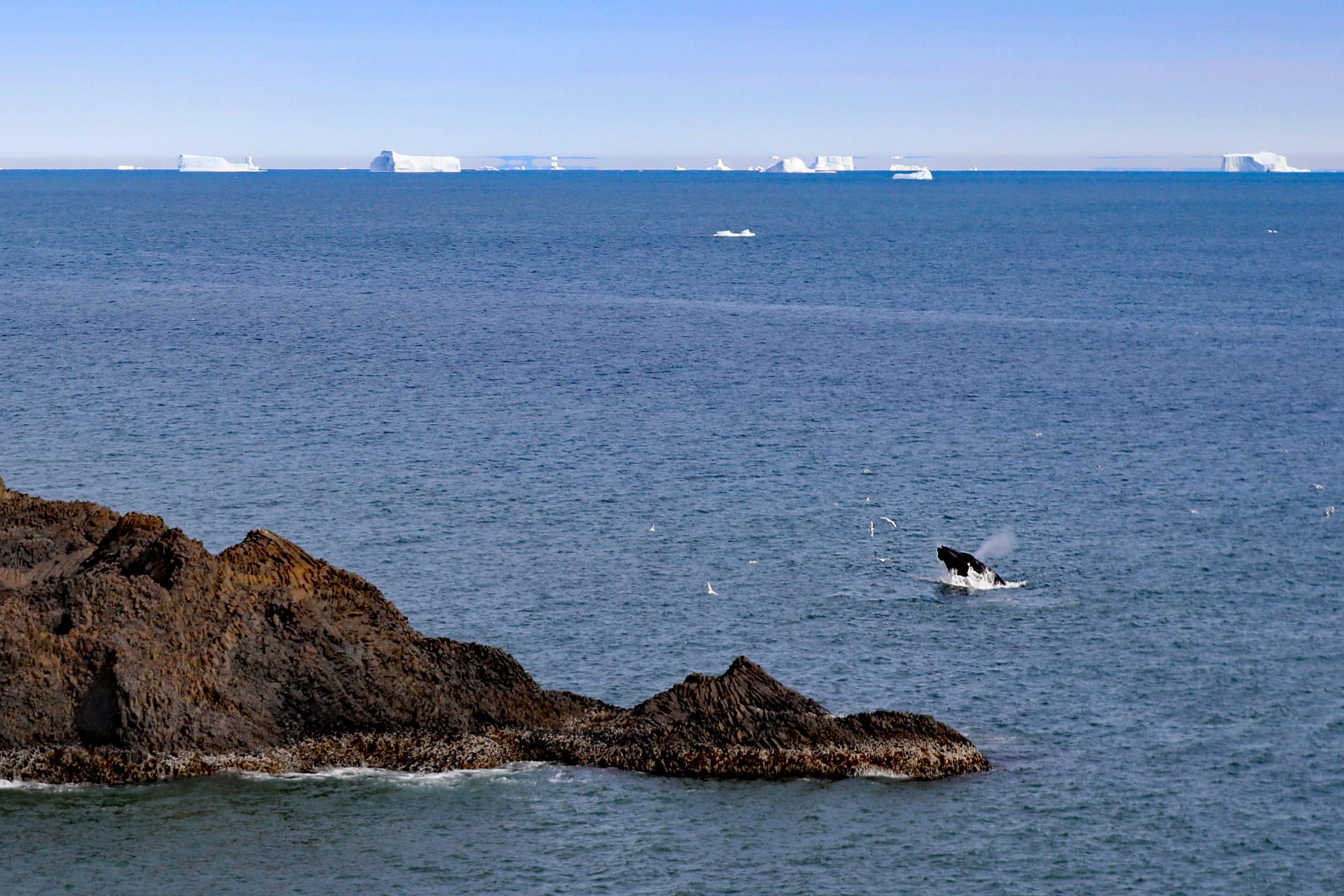 Whale watchig from the shore in Qeqertarsuaq Greenland. Jurga Rubinovaite.
