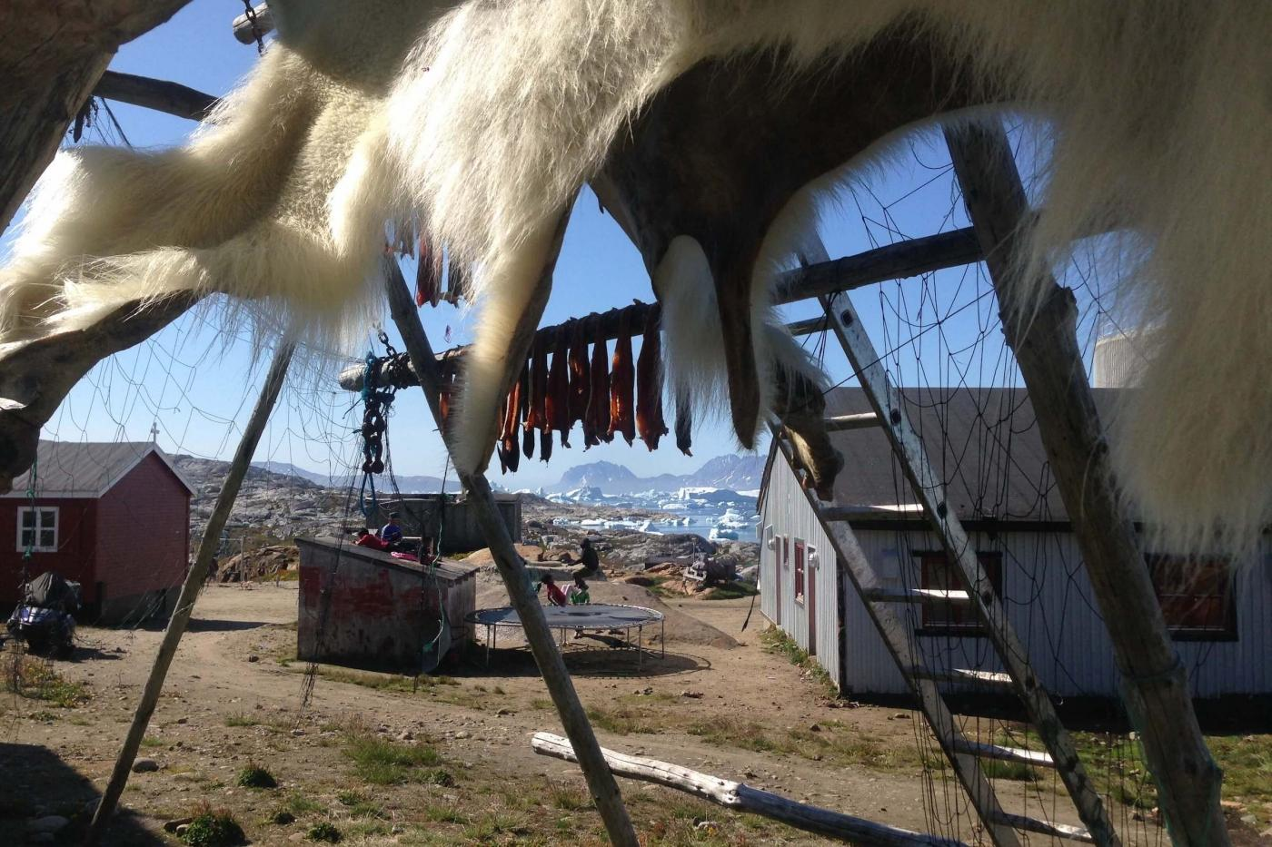 Early summer , june in the village Tiniteqilaaq. Polarbearskin hanging to dry. Photo by Line Kristiansen