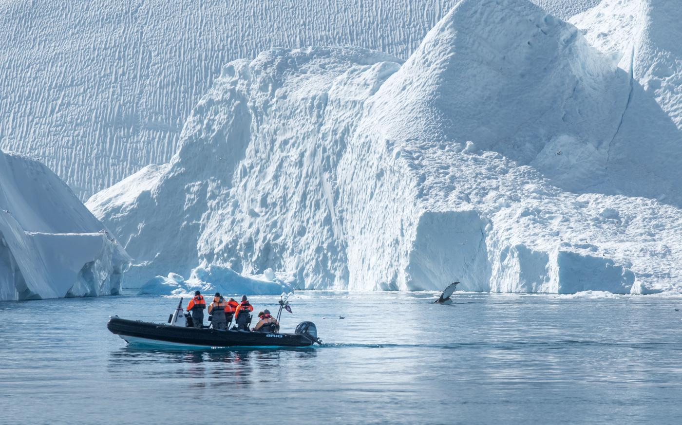 Whale watching. Photo by Ilulissat Adventure