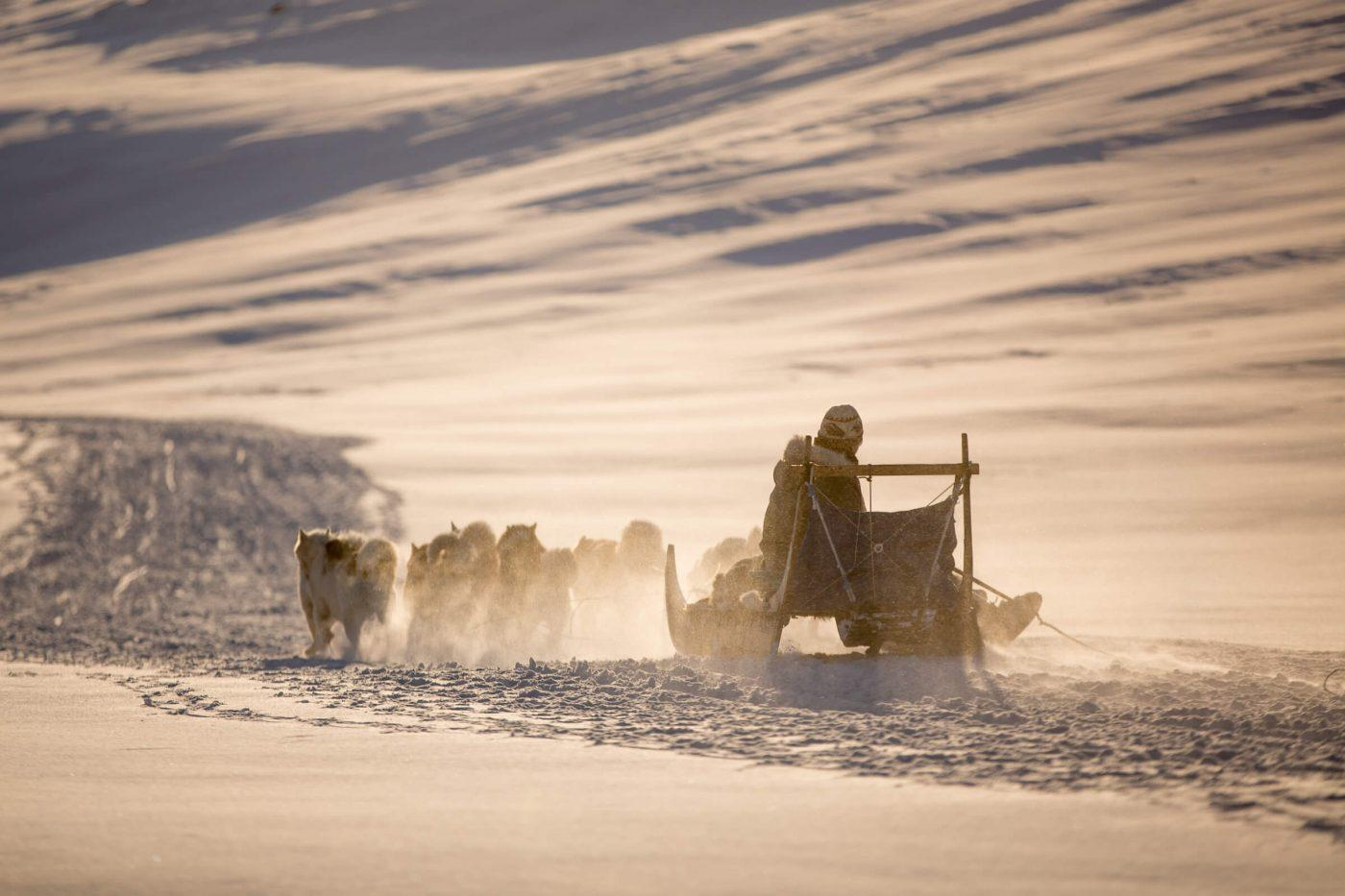 A dog sled heading home towards Sisimiut in Greenland in the setting sun. Photo by Mads Pihl