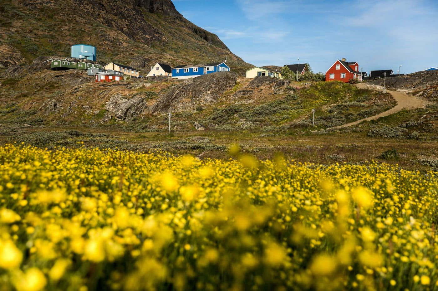 A field of flowers in Narsaq in South Greenland, by Mads Pihl