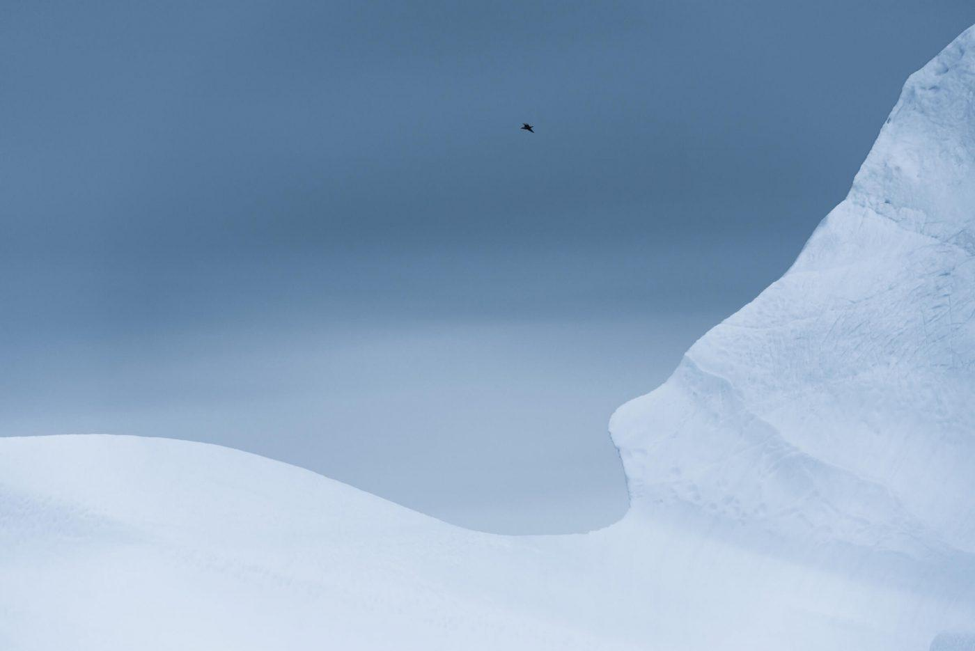 A personal favorite of mine from the Greenland trip. I just love the simplicity and cold hues of the image. There were a lot of fulmars flying around me, so I immediately knew that I wanted to include one of them in the frame. By Stian Klo