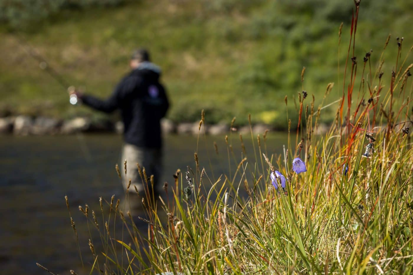 Fly fishing for arctic charr amon flowers and green meadows in South Greenland. By Mads Pihl