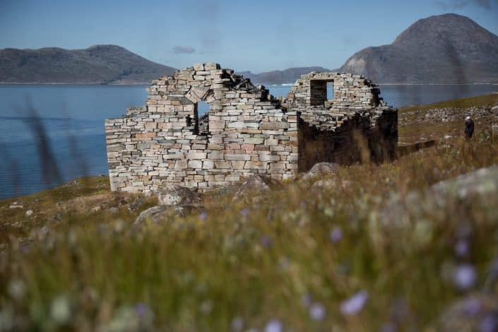 Hvalsey church ruin with flowers in the foreground in South Greenland. By Mads Pihl