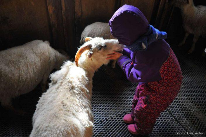 Little girl kissing a sheep at Ipiutaq Guest Farm in South Greenland. Photo by Julie Fischer