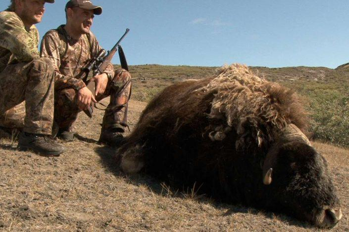 Musk ox hunting in Greenland. Photo by Major Hunting