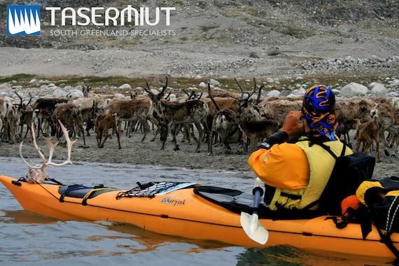 Tasermiut Expeditions: Kajak og vandretur på is i 8 dage i Sydgrønland
