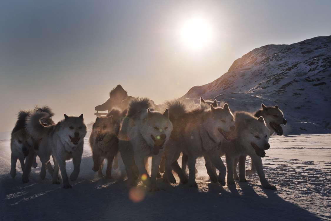 wogac-dog-sledding