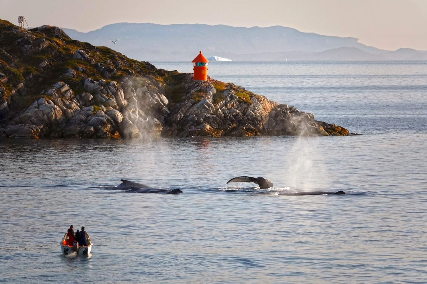 People observing three whale from their boat in Disko Bay. Photo by Espen Andersen, Visit Greenland