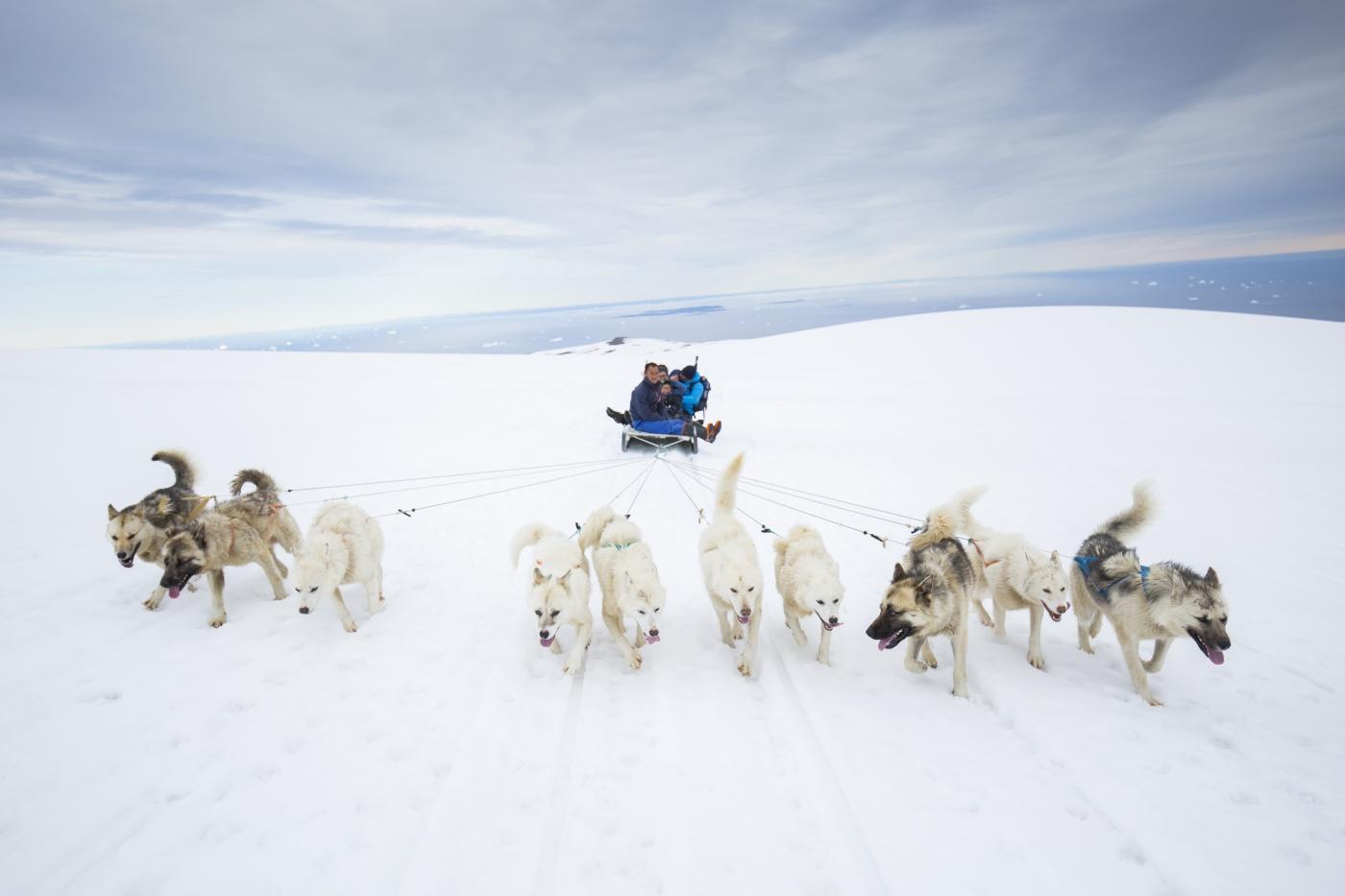 Dog Sled trip at the top of Lyngmark Glacier in the summertime. Photo Henrik Kaarsholm – Hotel Disko Island, Visit Greenland