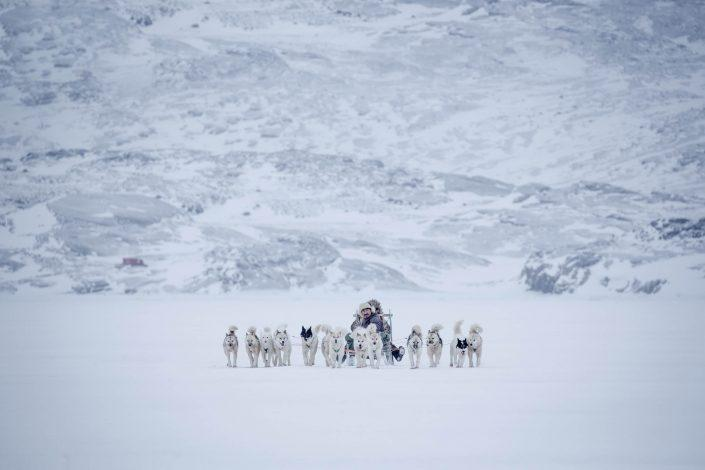 Dog sledding near Oqaatsut in misty weather in Greenland. Photo by Mads Pihl.