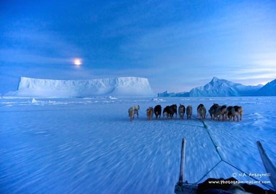 Dog Sledding near icebergs. By N. A. Antognelli