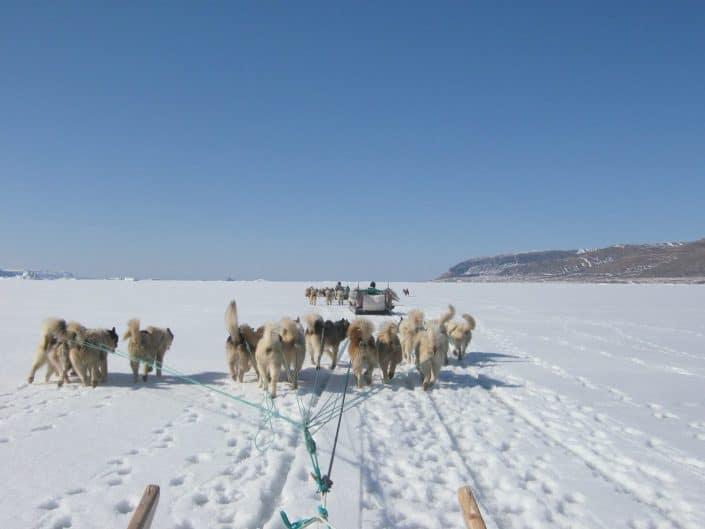 Dogsledding in Qaanaaq, North Greenland. Photo by Nunataq Atsuk Travel