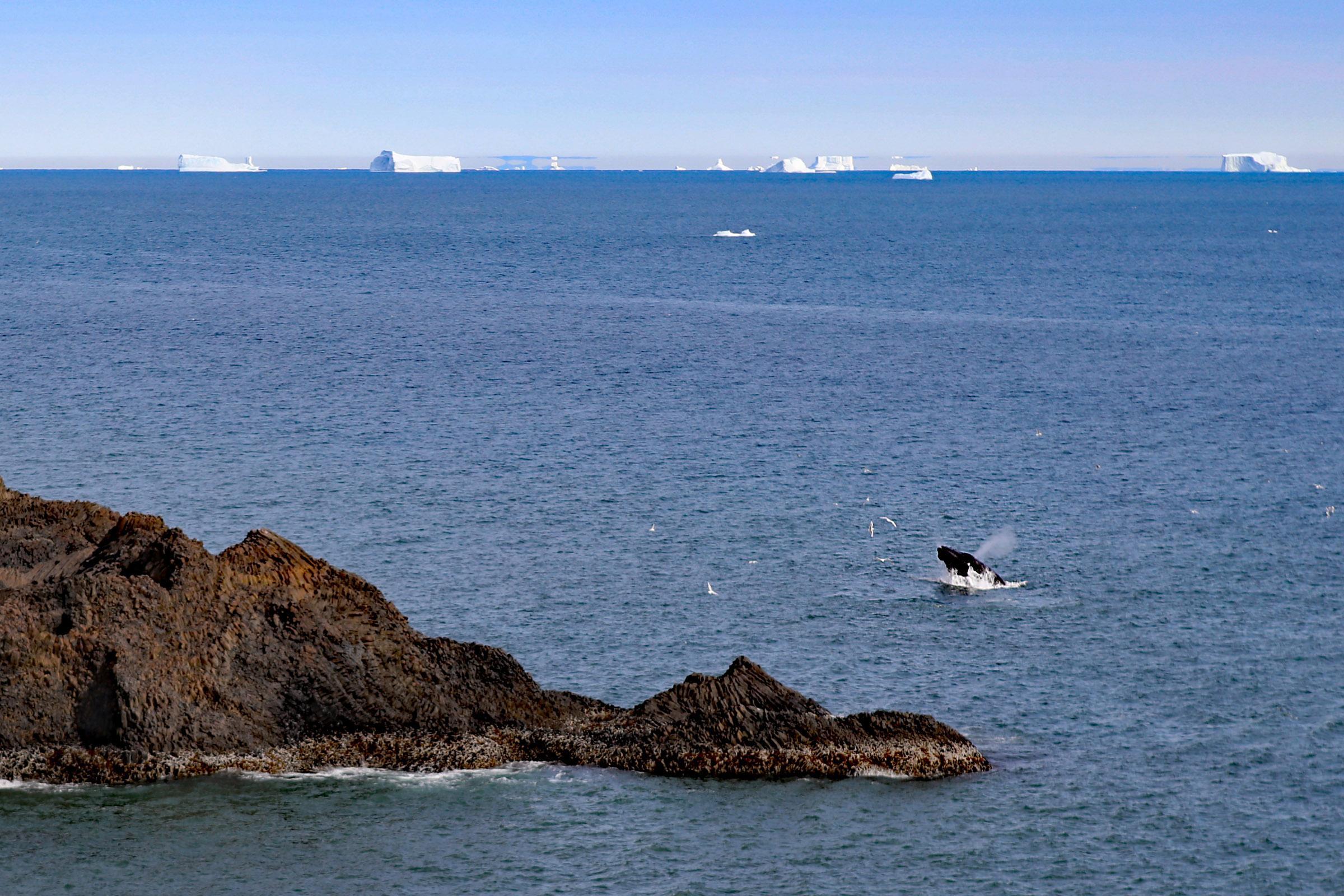 Whale watching from the shore in Qeqertarsuaq Greenland. Photo by Jurga Rubinovaite.