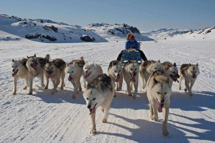 Dog sledding trip near Disko Bay. Photo by Thomas Eltorp, Visit Greenland
