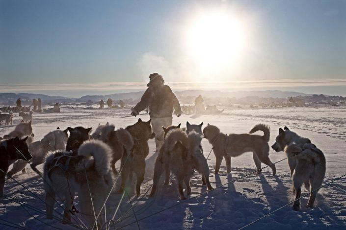 A dog sled driver with his dogs enjoying a break on a dog sled ride near Ilulissat in Greenland