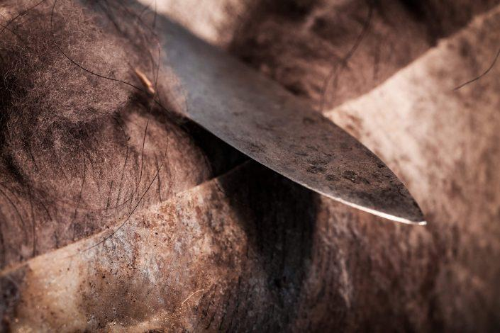 A knife cutting through musk ox hide in Sisimiut in Greenland. By Mads Pihl
