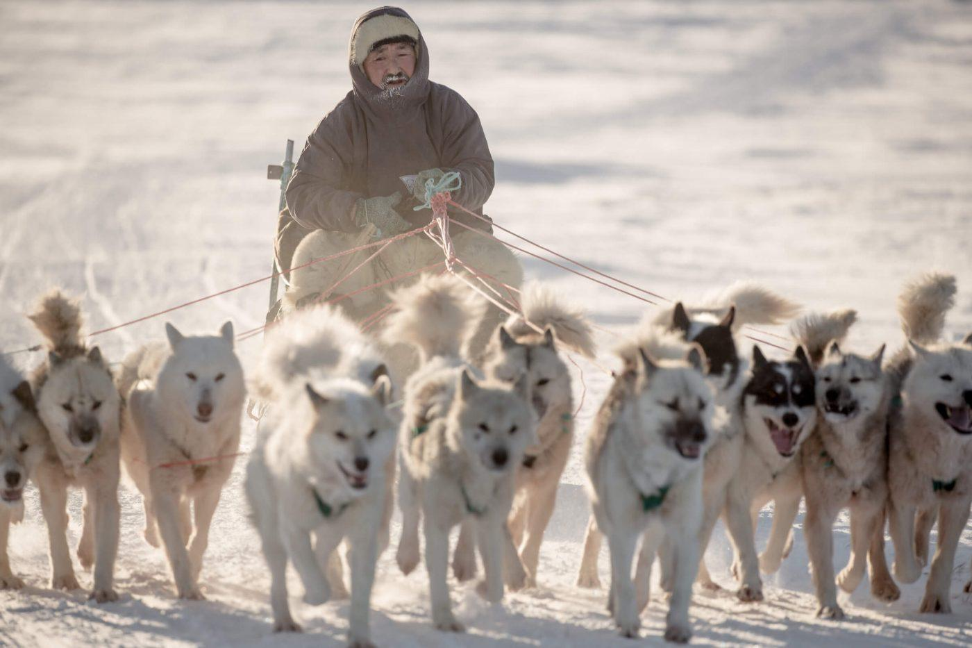 A pack of dogs and their musher on a trail near Ilulissat in Greenland