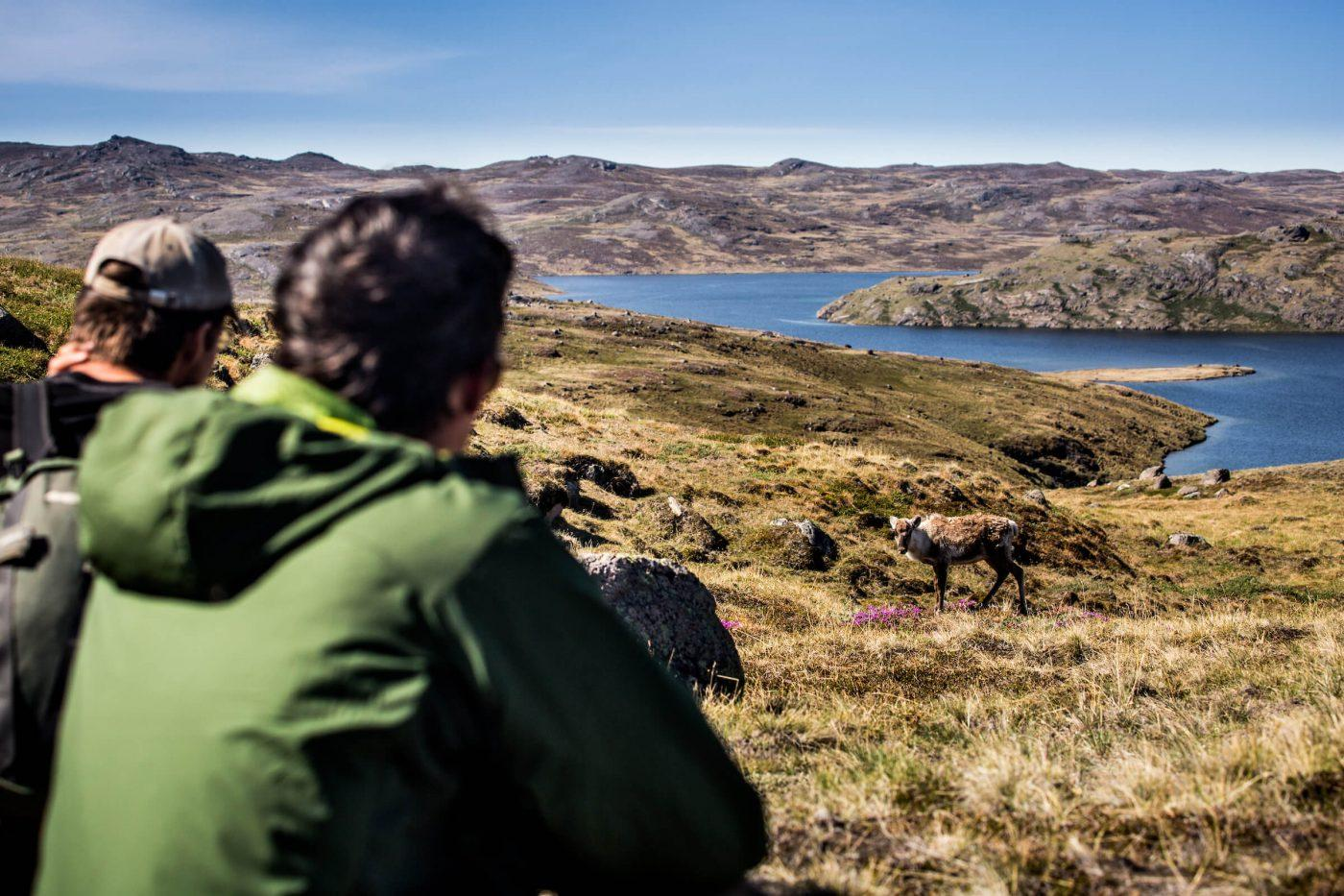 Hikers spotting reindeer and other wildlife in the Arctic Circle backcountry near Kangerlussuaq. By Raven Eye Photography