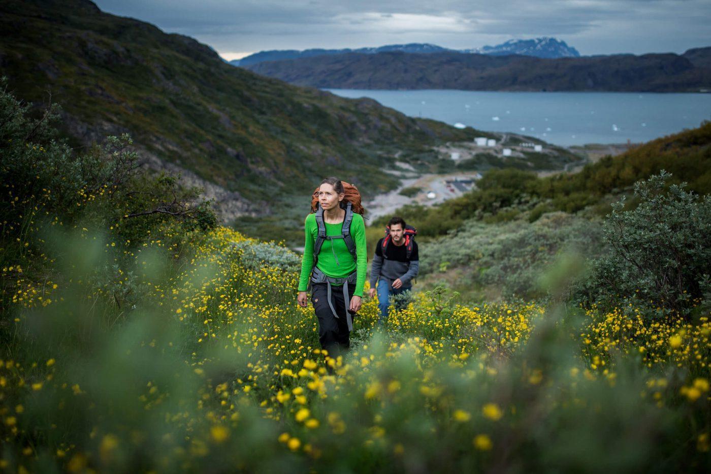 Hiking up through yellow flowers in Narsarsuaq. By Mads Pihl