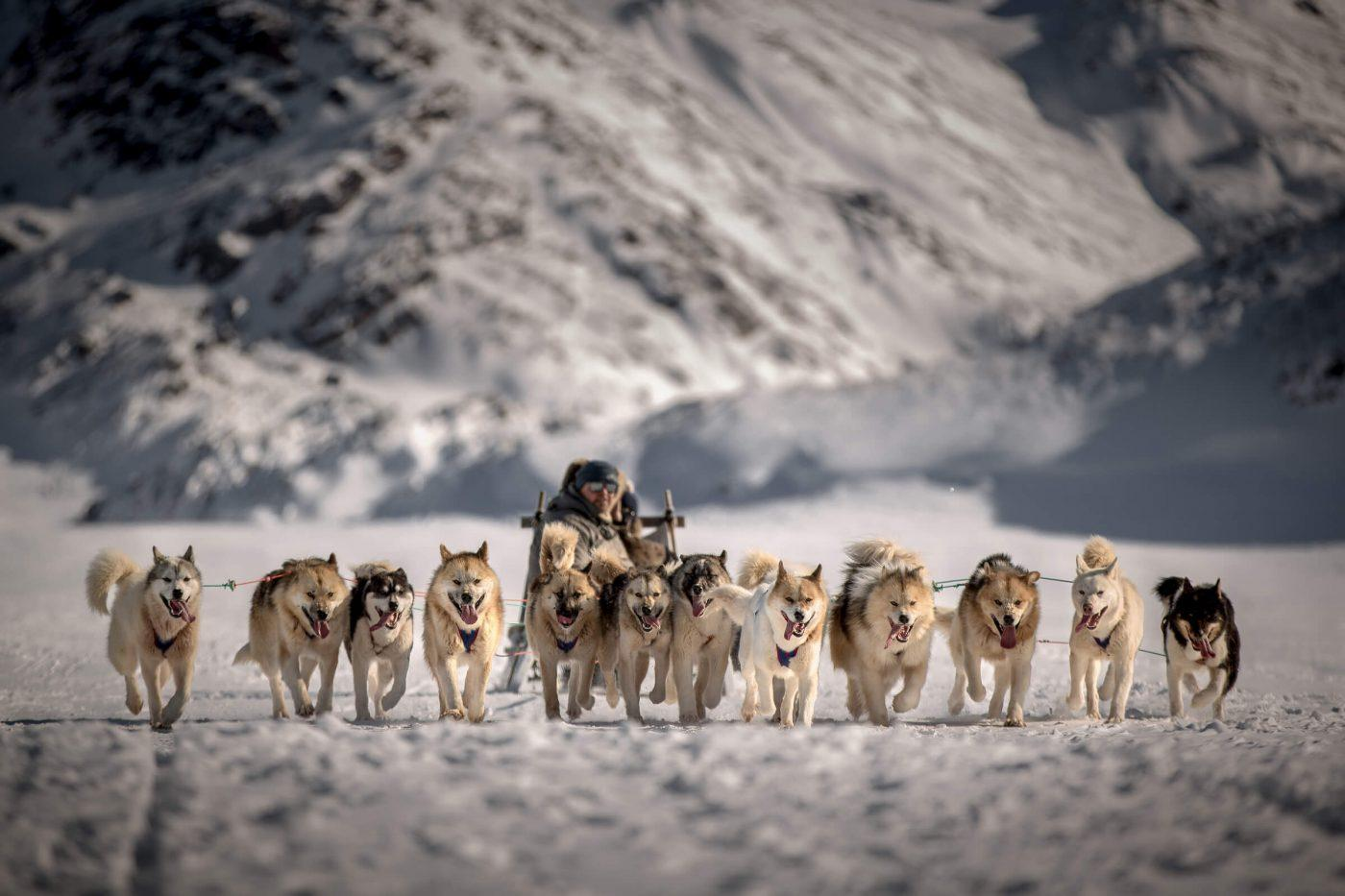 A team of dogs bringing a driver and his guests brack towards Sisimiut in Greenland. Photo by Mads Pihl, Visit Greenland