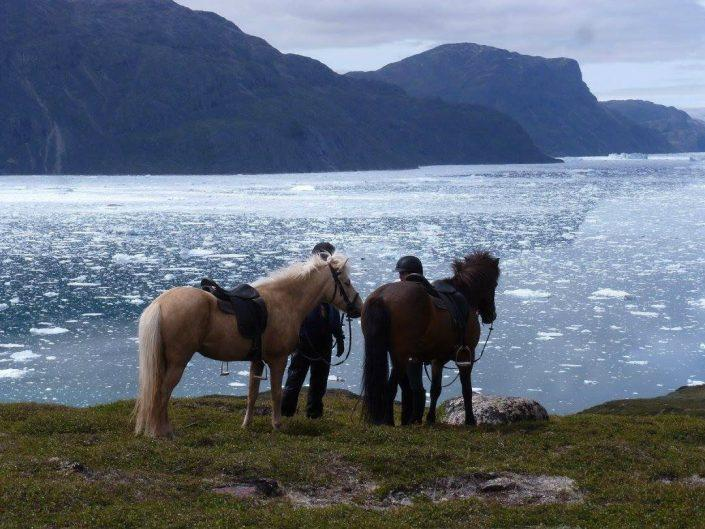 Two horses looking at small icebergs in the fjord of South Greenland in Summer. Photo by Inneruulalik Guest House