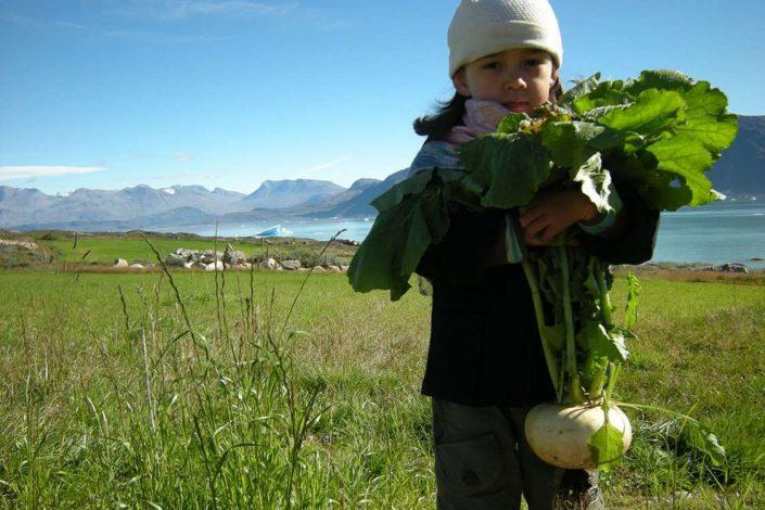 Little girl holding a homegrown turnip at Ipiutaq Guest Farm in South Greenland. Photo by Agathe Devisme