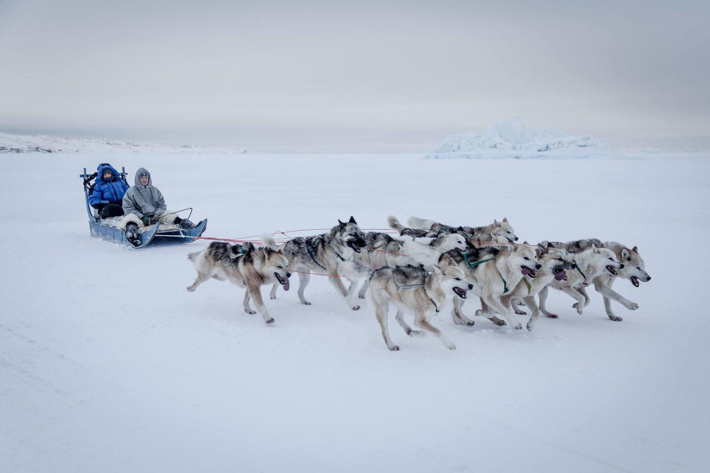 A dog sled on the sea ice between Ilulissat and Oqaatsut in Greenland. Photo by Mads Pihl - Visit Greenland