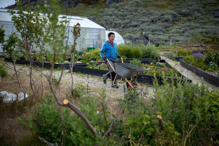 One of the Upernaviarsuk research station gardeners in South Greenland. Photo by Mads Pihl
