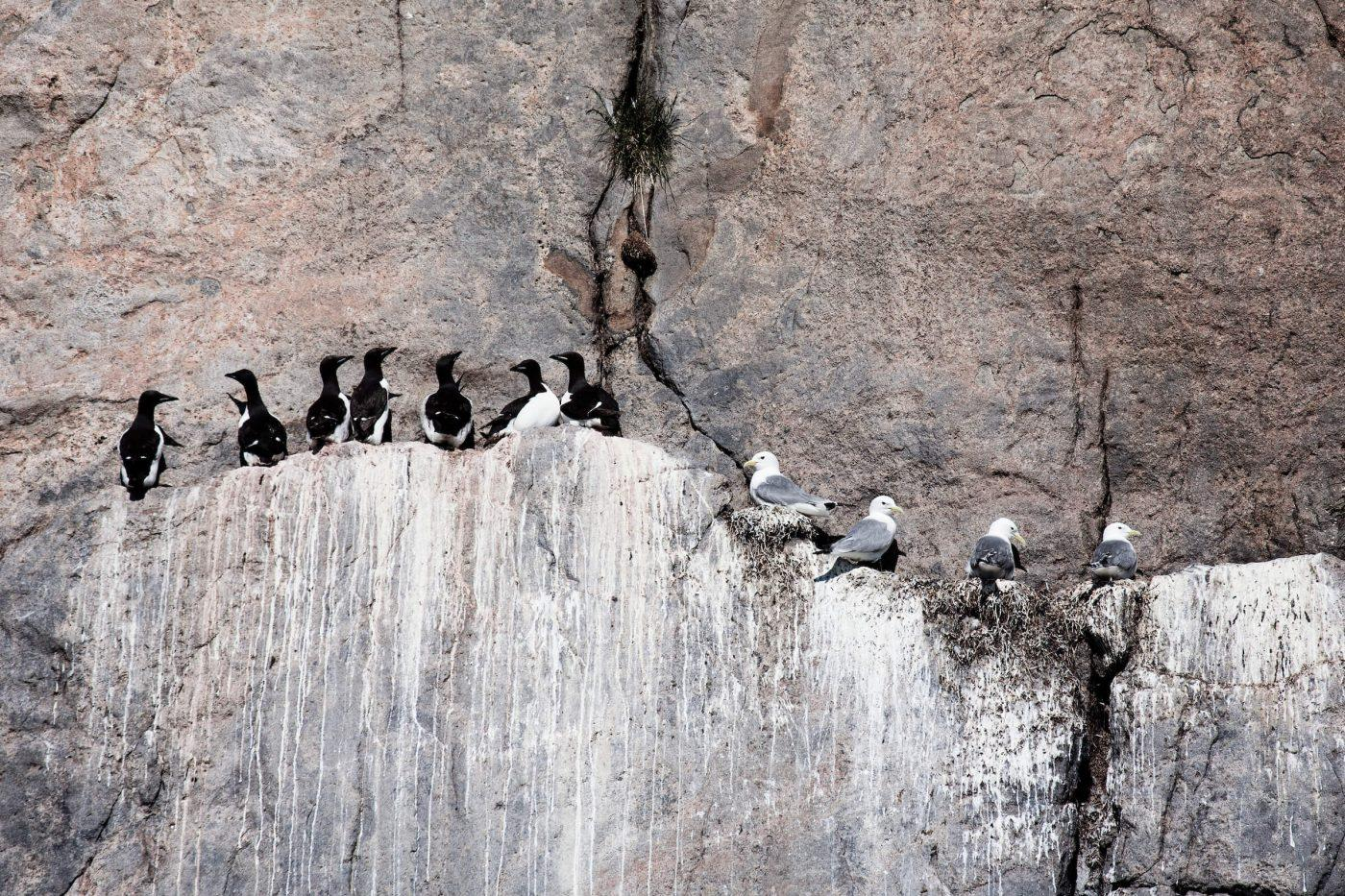 Birds sitting on a cliff. By Patricia Oczki