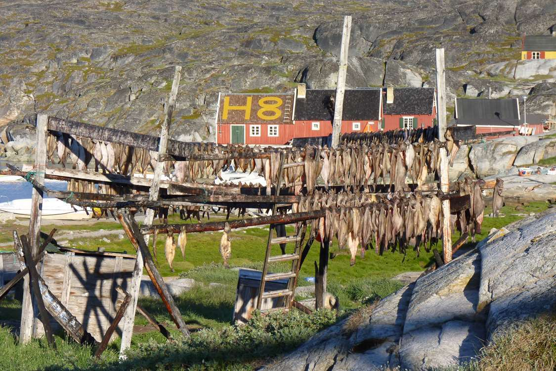 Dried fish on rack with Restaurant H8 Explorer in background in the Greenlandic Summer. Photo by Restaurant H8 Explorer
