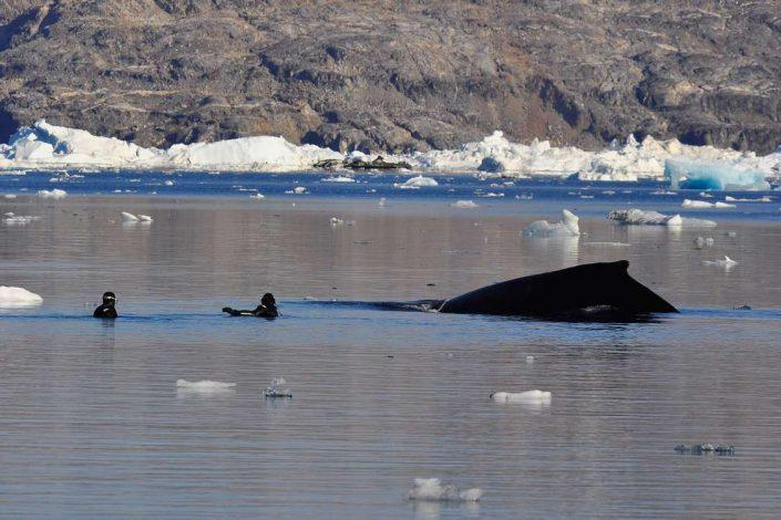 Divers swimming with a whale. Photo by Arctic Dream, Visit Greenland