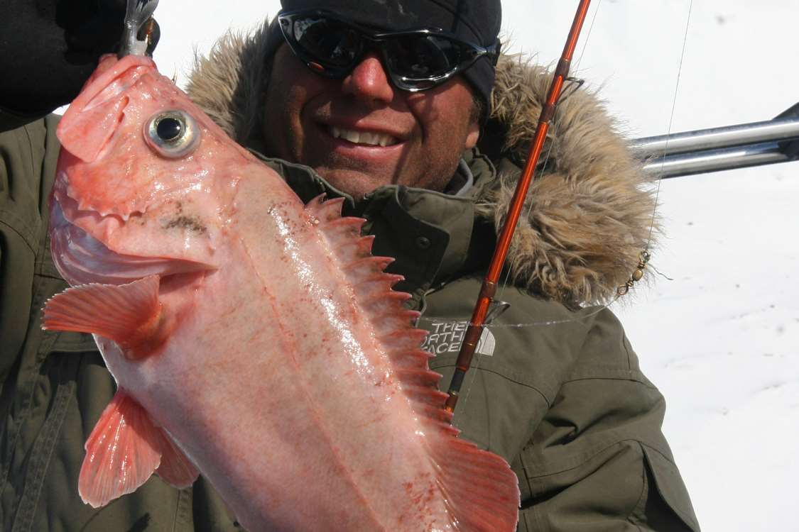 A guest holding a large redfish. Photo by Arctic Dream, Visit Greenland