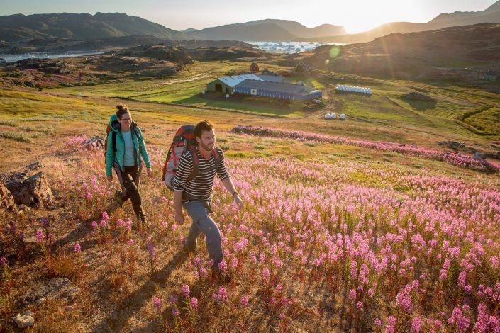 Two hikers in evening light walking past Tasiusaq sheep farm in South Greenland. By Mads Pihl