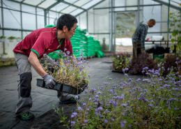 Gardeners at work at Upernaviarsuk research station in South Greenland. Photo by Mads Pihl