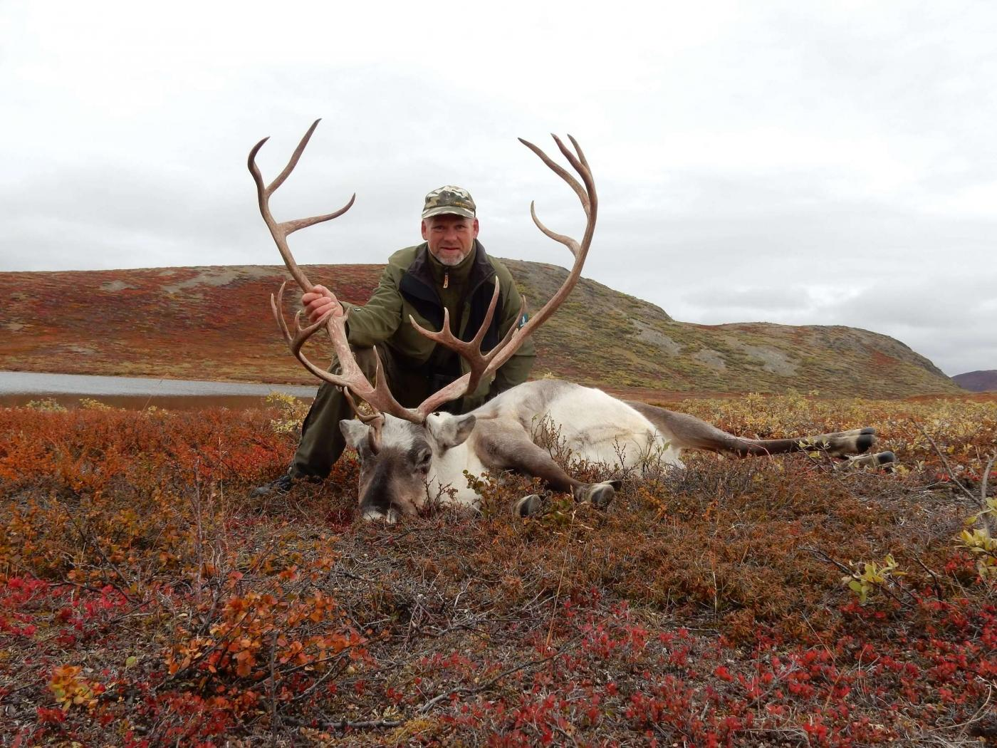 Reindeer in Autumn. Photo by Trophy Hunting Greenland, Visit Greenland