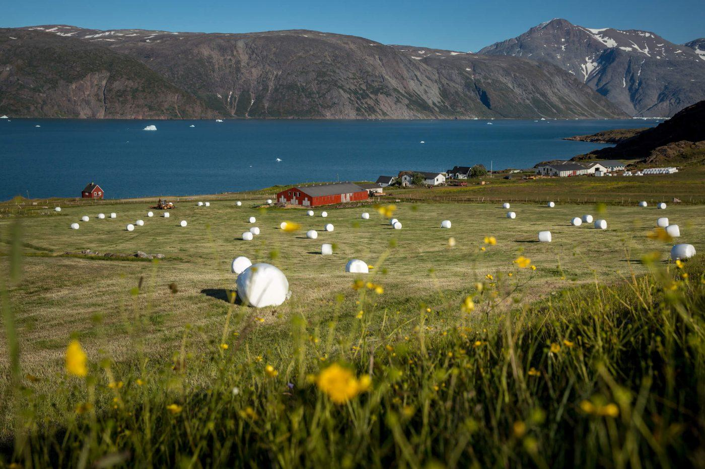 A field with straw bales at a farm in Qassiarsuk in South Greenland. Photo by Mads Pihl