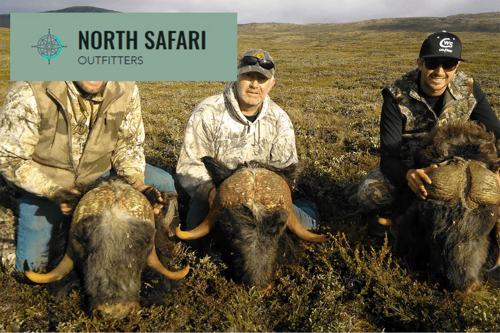 North Safari Outfitters: Muskox Hunting summer and fall