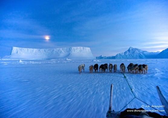 Dog Sledding near icebergs. By N. A. Antognelli